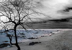 Themes: sadness, sad tree landscape, ocean shore, pale melancholic photography, lonelyness, water