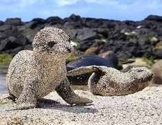 A los animales no les importa llenarse de arena… | 19 razones por la que los animales te gustan más que las personas