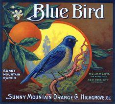 Blue Bird Brand Orange Crate Label, Sunny Mountain Orange Co. Vintage Diy, Vintage Labels, Vintage Ephemera, Vintage Cards, Vintage Signs, Graphics Vintage, Vintage Food, Vintage Ideas, Vintage Stuff