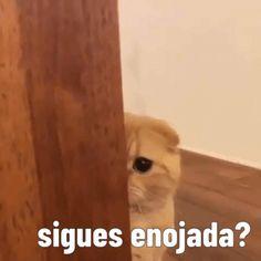 Funny Spanish Memes, Funny Memes, Sapo Meme, Memes Lindos, Cute Love Memes, Love Phrases, Cartoon Memes, Wholesome Memes, Meme Faces