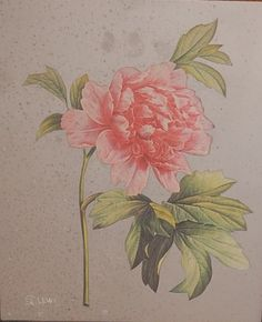 """Louis St. Lewis - """"Peony"""" 15x13 [SOLD]"""