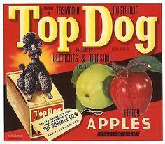 TOP DOG Brand, Poodle, Tasmania, Australia, **AN ORIGINAL CRATE LABEL** T49