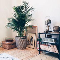 Välkommen hem lilla (stora) palm!  #NyaLyanVäxerFram