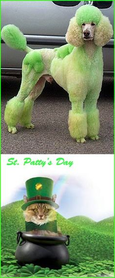 Dogs and Cats both love St.Patrick's Day! #greenalltheway #potofgold #luck