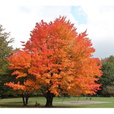 7f46f765711 13 Best Shade Trees images