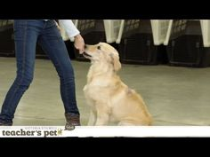 Impulse Control With Toys | Teacher's Pet With Victoria Stilwell - YouTube
