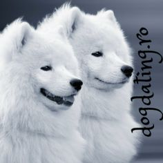 Thanks to our friends from The Pole Society Everything About You, Samoyed, Husky, Dogs, Animals, Photos, Friends, Amigos, Animales