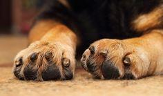 dog licking biting paws