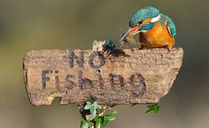 """No Fishing"""