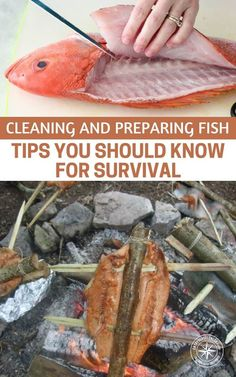 Cleaning and Preparing Fish: Tips You Should Know for Survival - This article is all about what you do after you catch the fish. Getting them on a hook or on the tip of a spear is one thing. Once you need to removed the guts and cook it the journey becomes something different entirely. #fish #fishing #survival #preparedness #prepper
