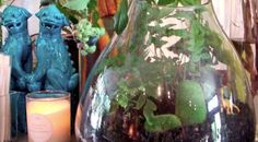 If you don't have space for a garden, or simply want to bring a little nature indoors, here's a tutorial to help you make a terrarium…