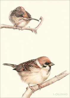 Colored Pencil Portrait, Color Pencil Art, Bird Drawings, Colorful Drawings, Watercolour Birds, Sparrows, Bird Illustration, Pastel Art, Watercolor Techniques