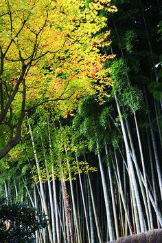 Arashiyama, Kyoto, Japan 嵐山、京都