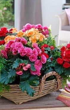 Flower Vases, Flower Pots, Potted Flowers, Good Morning Flowers, Flowers For You, Good Night Image, Morning Images, Morning Quotes, Flower Wallpaper