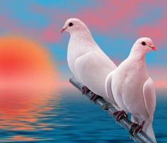 On the wings of snow white doves!  ♥ ♥ www.paintingyouwithwords.com
