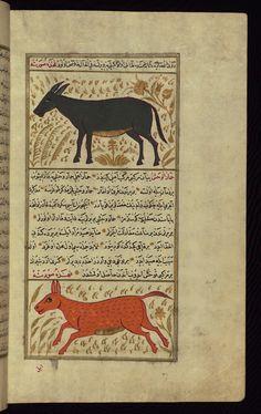A donkey and a wild ass Wonders of Creation  by Qazwīnī 1293 was translated to Turkish in 1717  completed by Rūzmah-ʾi Nāthānī - W659
