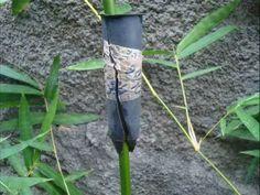 Bambu - pesquisador estuda alporquia em bambu. - YouTube
