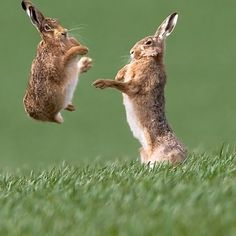 Jump for joy or something?!