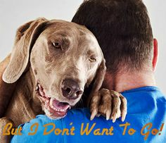 Tips to Sell A Home When You Have #Pets: http://www.maxrealestateexposure.com/tips-to-sell-a-home-with-pets/ #realestate