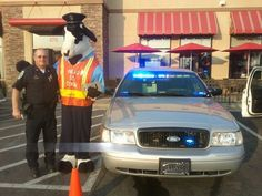 A cow putting over a police officer!