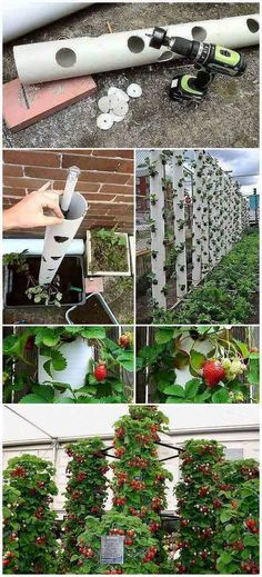 Grow sweet strawberry in a ver Greenhouse Gardening, Hydroponic Gardening, Strawberry Tree, Outdoor Projects, Outdoor Decor, Vertical Garden Wall, Deck Plans, Garden Architecture, Backyard Landscaping
