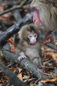 Awaji Monkey Center