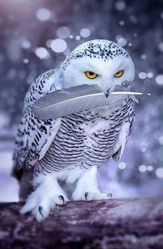 Eulen / Owls