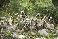 Indian Monkey by Kailash Kumar on Indian Monkey, Indian Animals, States Of India, Animal 2, Garden Sculpture, Around The Worlds, Creative