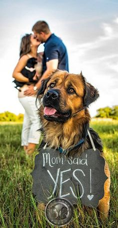 18 Best Engagement Announcement Photo Ideas Wedding Inspiration engagement photos with dogs - Engagement Photos Dog Engagement Photos, Engagement Announcement Photos, Fall Engagement, Engagement Couple, Engagement Shoots, Engagement Ideas, Boy Announcement, Announcing Engagement, Dog Photography