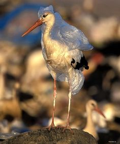 Truly Shocking Images of Pollution -