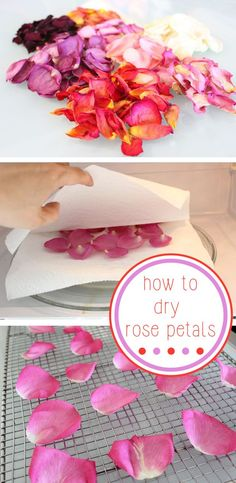 This is the best way to preserve the beauty and fragrance of a beautiful bouquet of fresh roses - Drying the petals make great embellishments for cards, confetti for weddings and bridal showers, or homemade potpourri. Flower Crafts, Diy Flowers, Flower Art, Rose Flowers, Purple Roses, Rose Crafts, Marigold Flower, Potted Flowers, Flower Girls