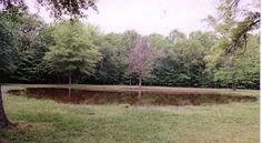 Bloody Pond, May, 2008 The anniversary of the two day long Battle of Shiloh was yesterday and the day before--and that slipped my mind. Spooky Places, Haunted Places, American Civil War, American History, Shiloh Battlefield, Battle Of Shiloh, Civil War Books, Creepy Houses, Creepy Pictures