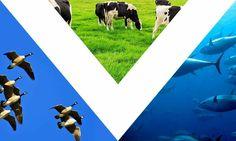 Una bandera vegana