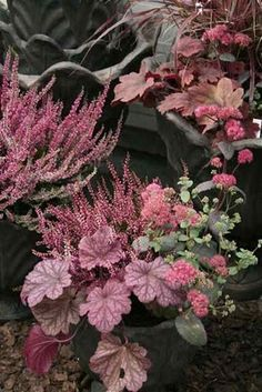Gardening Autumn - - With the arrival of rains and falling temperatures autumn is a perfect opportunity to make new plantations Heuchera, Autumn Garden, Plants, Urban Garden, Plant Combinations, Beautiful Flowers, Fall Flowers, Flowers, Container Gardening