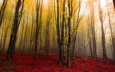 Color Fog by Mirko Fikentscher on Paintings I Love, Cool Artwork, My Photos, Places To Visit, Country Roads, Nature, Photography, Trees, Connect