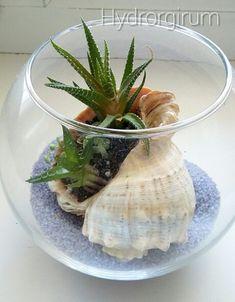 Сиреневое море. флорариум