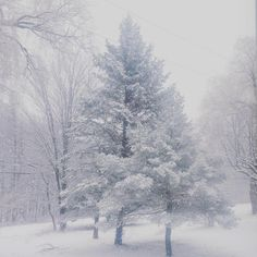 """Snow #snow #winter #upstatenewyork #newyork #newyorkwinter #trees #evergreen #gingham #pretty #saturday #snowysaturday"""