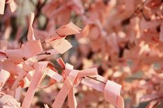 Love this idea! To incorporate with family tree. A wish tree <3    So this is a very Japanese thing, but I thought you could maybe use it for your wedding cause they are just so pretty. People write wishes and tie them on the tree. They look like flower blossoms. If we use fabric, I can create art with it later :)