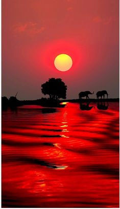 Sunset with Elephant, Botswana