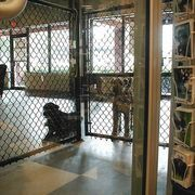 How to Start a Doggy Day Care Business | eHow