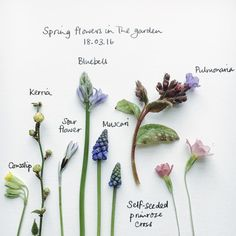 A great method for flower inventory! Helps break down and record the ever changing color pallet of the garden.
