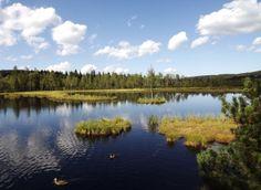 Chalupska Moor, Sumava National Park, Czech Republic Visit Prague, European Countries, My Heritage, European Travel, Natural Wonders, Czech Republic, Roots, Travelling, Beautiful Pictures