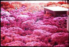 """To commemorate the closing of the Massachusetts Mental Health Center's old building in 2003, the artist Anna Schuleit created """"Bloom,"""" an art installation comprising 28,000 pots of flowers."""