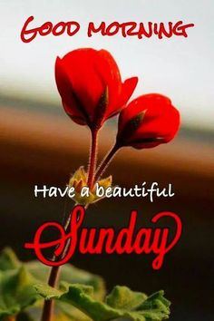 Good Morning God New Quotes, Photos, Images Happy Sunday Images, Good Morning Sunday Images, Good Morning Roses, Good Morning Images Flowers, Good Morning Image Quotes, Happy Sunday Quotes, Good Morning Beautiful Images, Good Morning Gif, Good Morning Picture