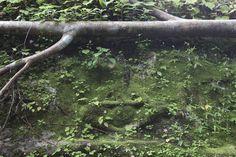 Mahendraparvata | Bhuddas carved into the mossy rock face at Mahendraparvata