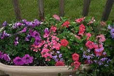 Container Gardening Full Sun Ideas - Home Dignity