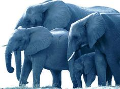 Over Free Animal wallpaper - Elephant - - 6 wallpaper in Dream Wallpaper. Wild Elephant, Elephant Family, Elephant Love, Little Elephant, Elephant Art, Elephant Design, African Elephant, Elephant Wallpaper, Animal Wallpaper