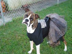 Zoe in her SAINTS costume.