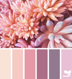 Coloring Schemes Design Luxury today S Inspiration Image for Succulent Hues is by Colour Pallette, Color Palate, Colour Schemes, Color Trends, Color Combos, Pink Palette, Decoration Palette, Design Seeds, Colour Board