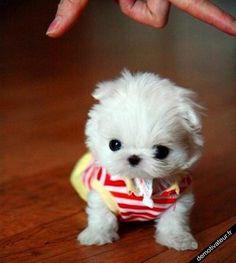 Mini chien